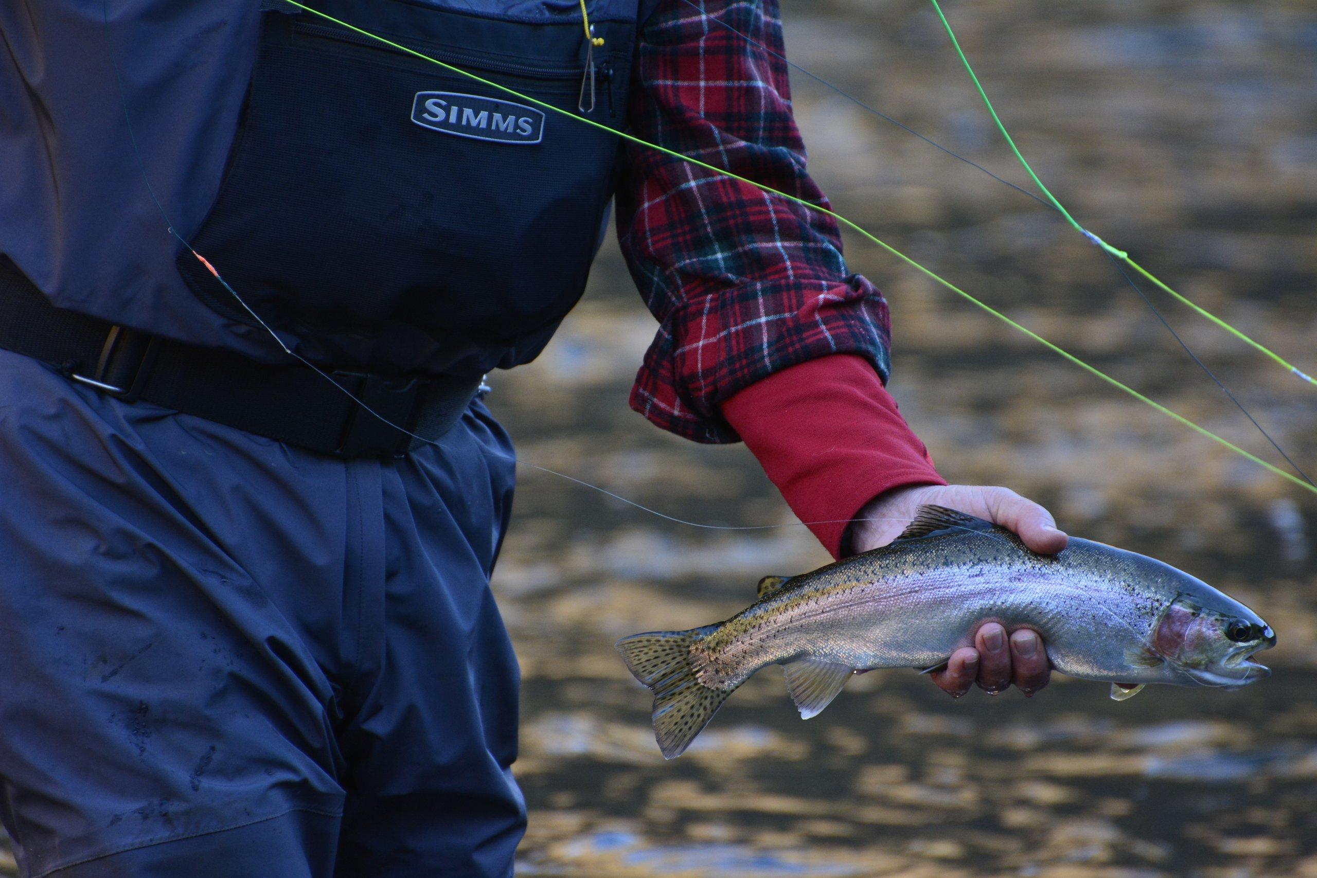 grande ronde trout
